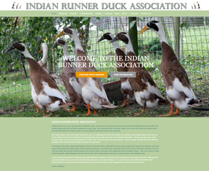 Indian Runner Duck Association